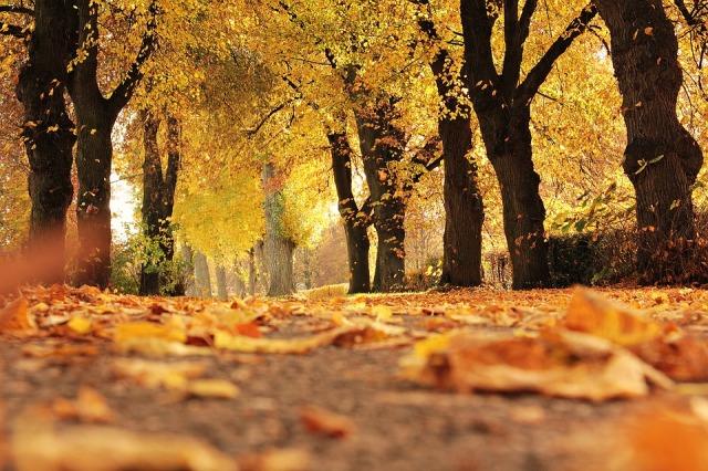 trees-1789120_960_720